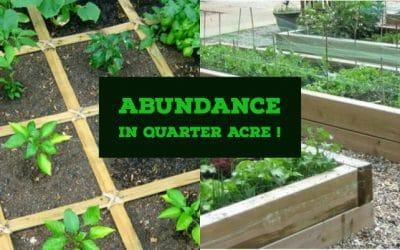 Abundance on a Quarter Acre Farm Plot?