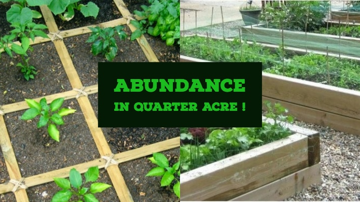 Abundance on a Quarter Acre Farm Plot?